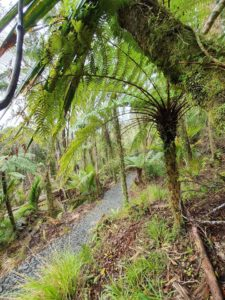 Paparoa Track, one more month!